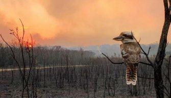Tenistas donan 725 mil dólares para ayudar con los incendios en Australia