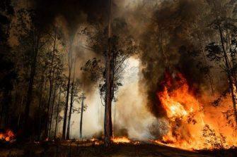 Los Grand Slams se unen para apoyar a Australia tras los incendios